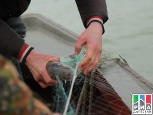 Возрождение рыбной отросли на острове Чечень