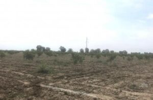 В Сулейман-Стальском районе заложен крупный сад грецкого ореха