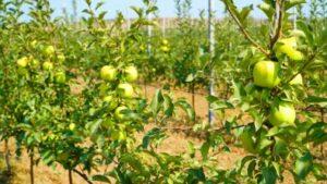 В этом году Дагестан на 20% перевыполнит план по закладке садов