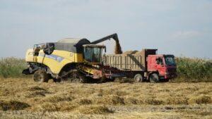 В Дагестане собрали более 100 тысяч тонн риса