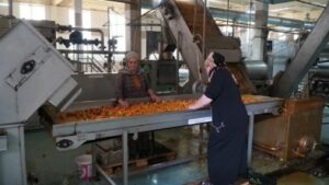 Кикунинский консервный завод возобновил работу на период сбора урожая в Дагестане